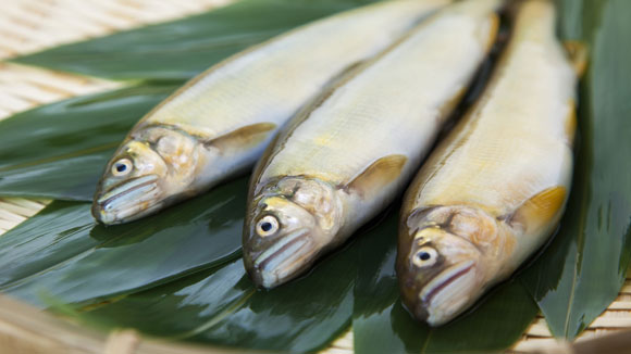 6 ways to tell if your fish is fresh